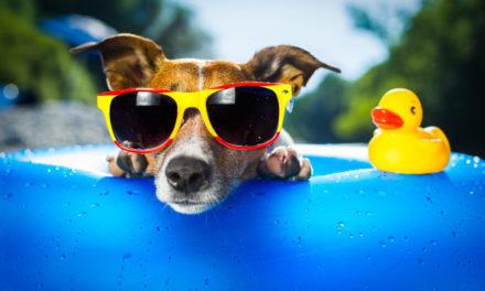 Sunwear is Good Eye Health Care:  Six reasons you should wear sunglasses more often.